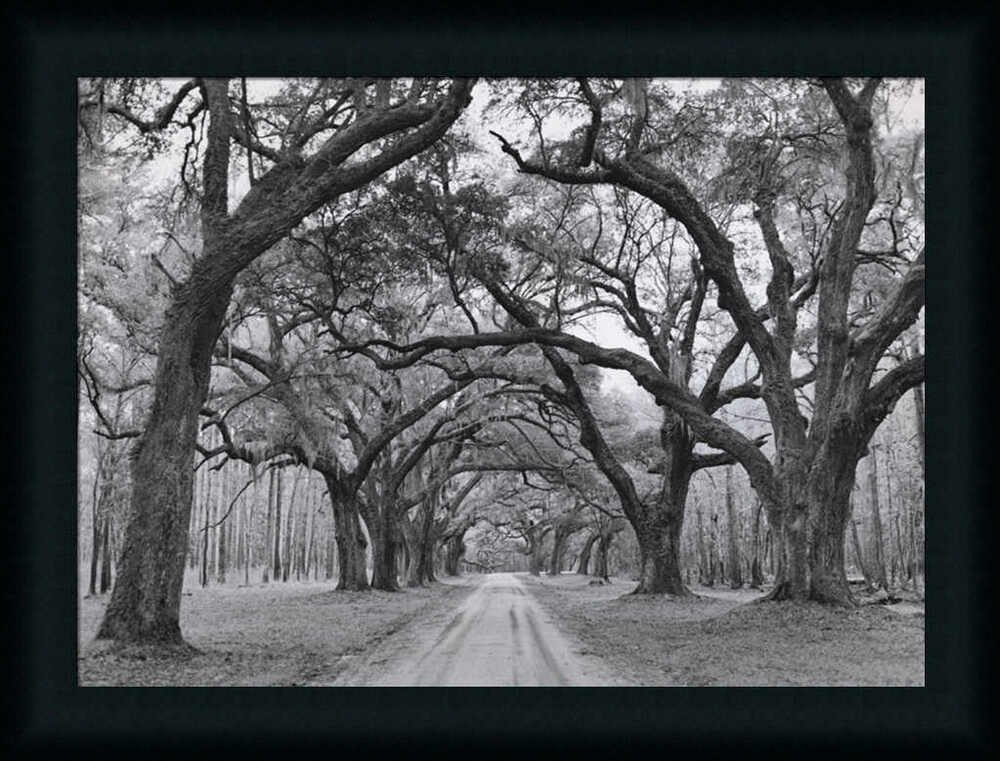 Black and White Wall Decor Elegant Oak Arches by Jim Black White Graphy Framed Art Print Wall Décor Picture