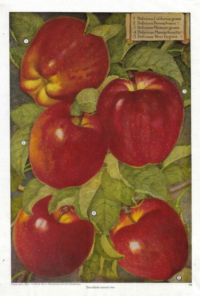 Fruit themed Kitchen Decor Collection New Best 25 Apple Kitchen Decor Ideas On Pinterest
