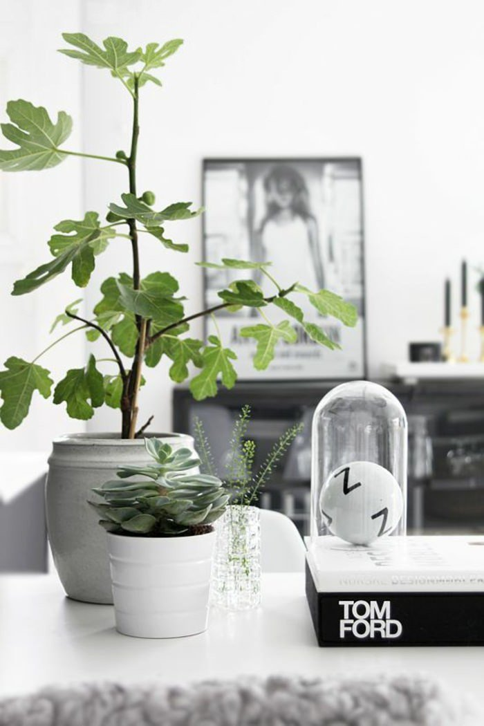 Indoor Plants for Home Decor Beautiful 99 Great Ideas to Display Houseplants Indoor Plants Decoration Page 5 Of 5
