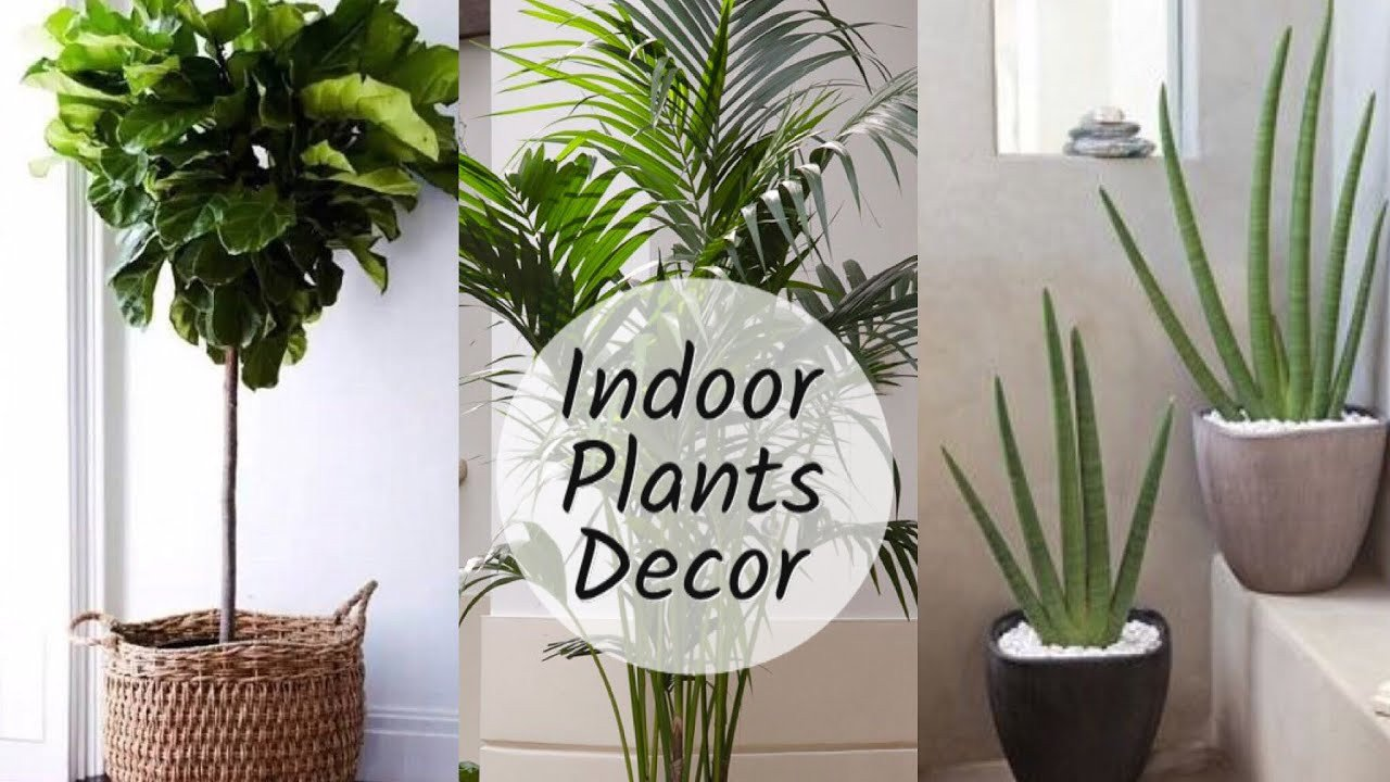 Indoor Plants for Home Decor Beautiful Home Decoration with Plants Best Indoor Plants In India for Decoration