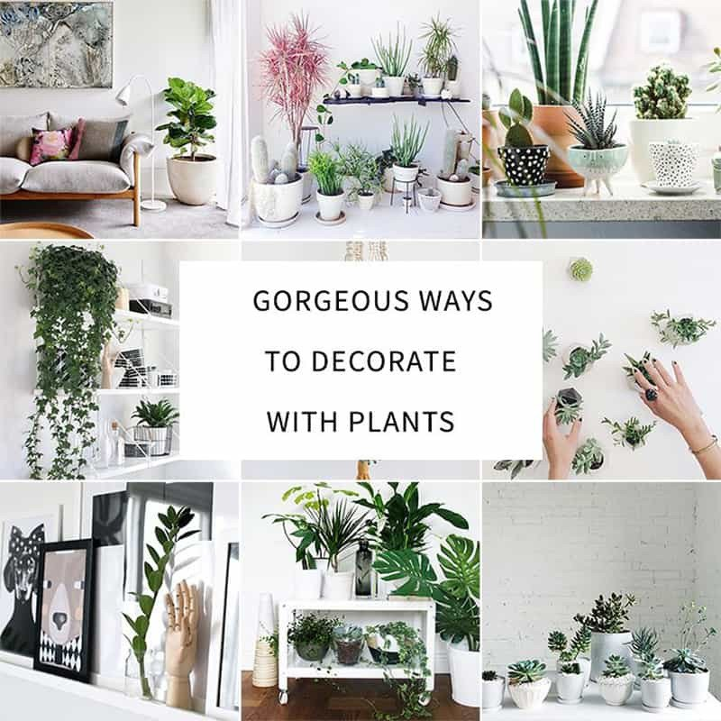 Indoor Plants for Home Decor Best Of How to Decorate Your Interior with Green Indoor Plants and Save Money