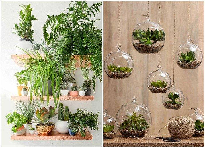 Indoor Plants for Home Decor Elegant Decorate Your Home with Indoor Plants 5 Easy Home Decor Ideas