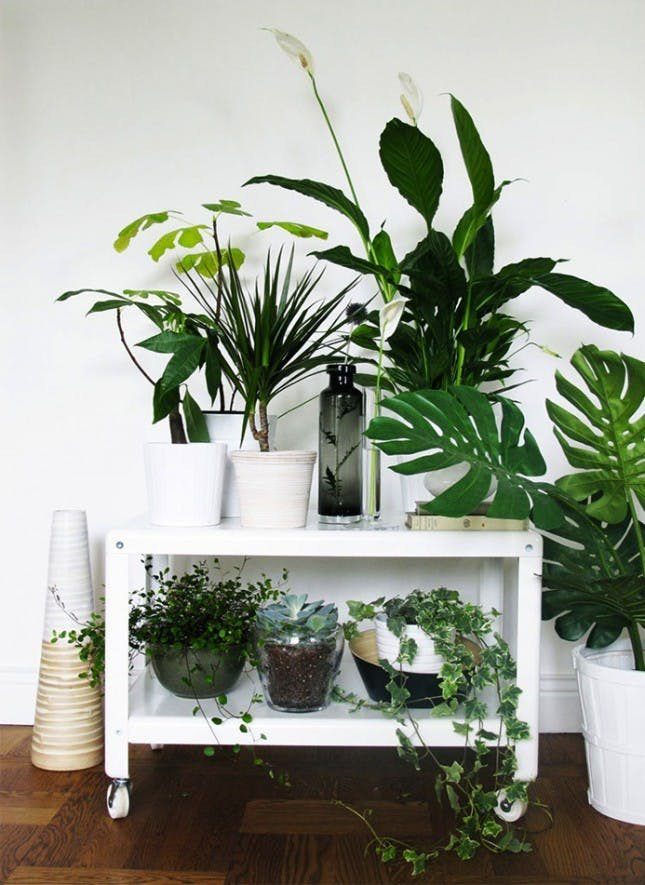 Indoor Plants for Home Decor Fresh 25 Unexpected Ways to Decorate with Plants