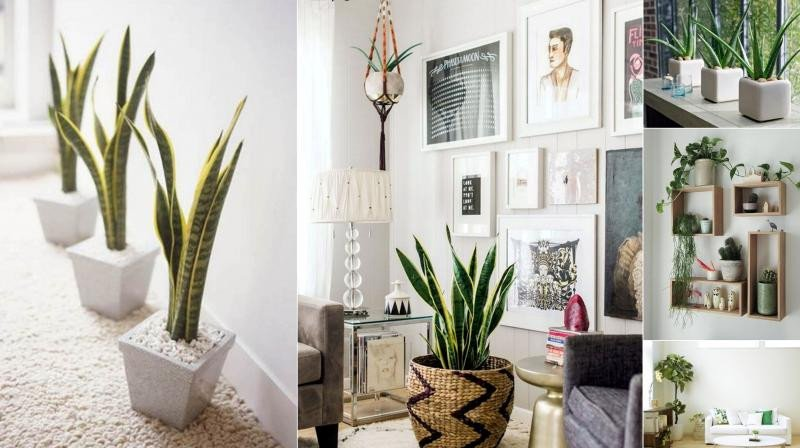 Indoor Plants for Home Decor Inspirational 6 Creative Ways to Include Indoor Plants Into Your Home Décor