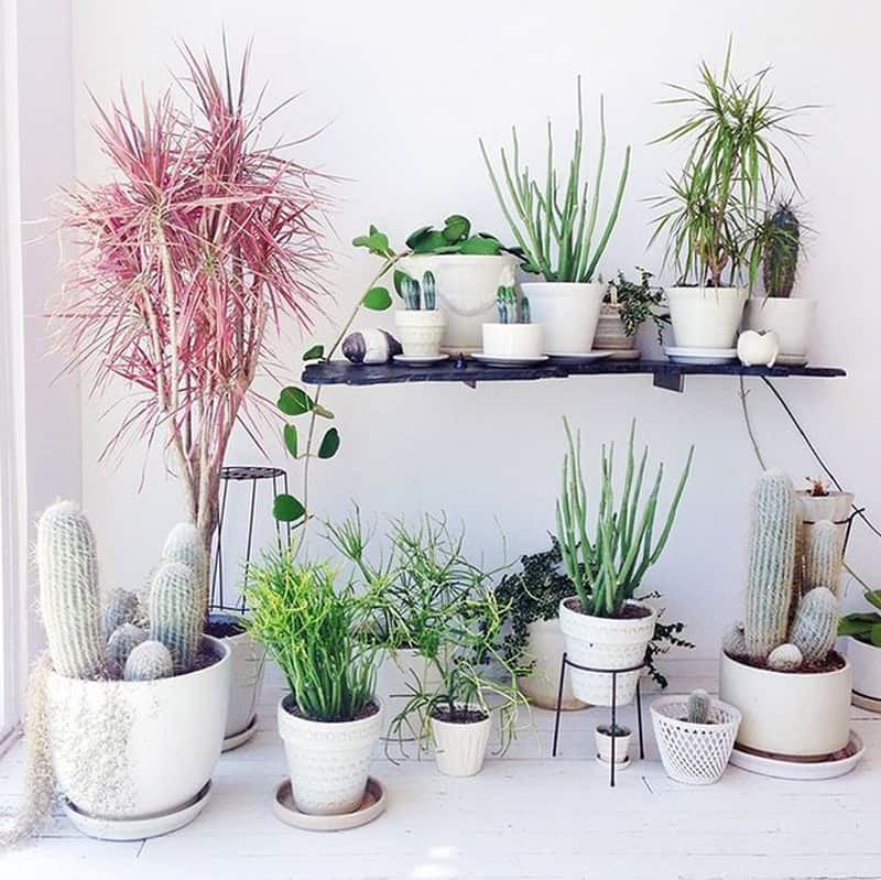 Indoor Plants for Home Decor Luxury How to Decorate Your Interior with Green Indoor Plants and Save Money