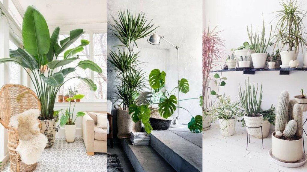 Indoor Plants for Home Decor New 10 Beautiful Ways to Decorate Indoor Plant In Living Room