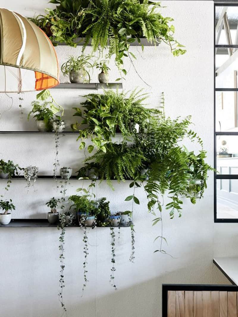 Indoor Plants for Home Decor Unique How to Decorate Your Interior with Green Indoor Plants and Save Money