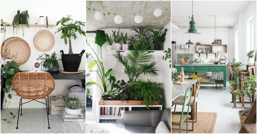 Indoor Plants for Home Decor Unique Indoor Plant Decor Ideas to Freshen Up Your Home