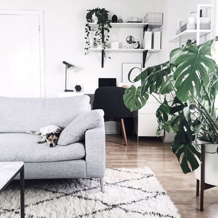 Modern Living Room Decorating Ideas Plant Awesome Revitalize Your Home with Lush Indoor Plants In Every Room
