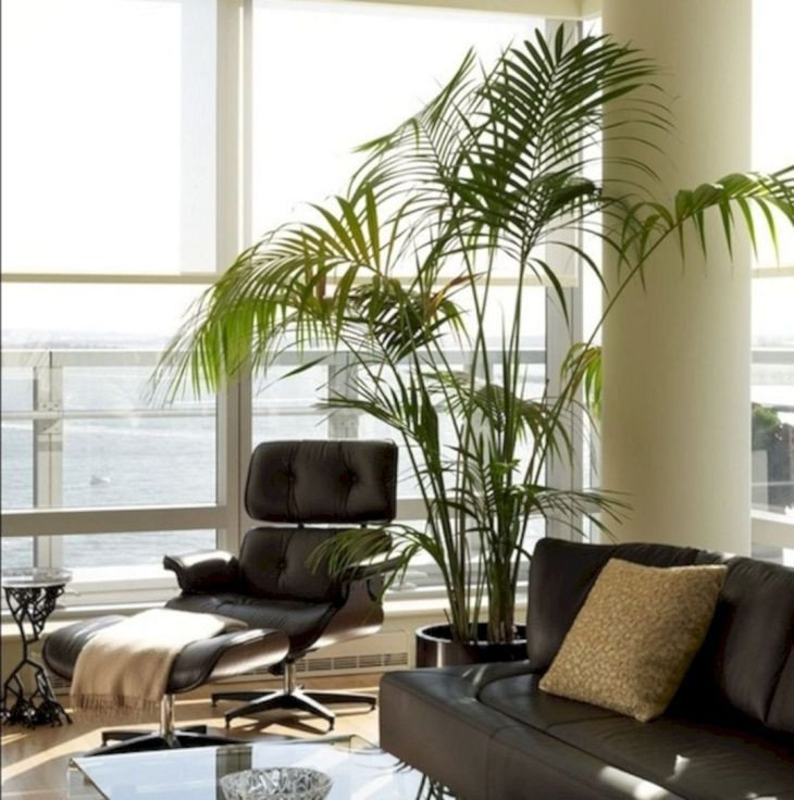 Modern Living Room Decorating Ideas Plant Luxury 25 Beautiful Living Room Plants Ideas for the Living Room Decoration Style 2018 – Decoredo