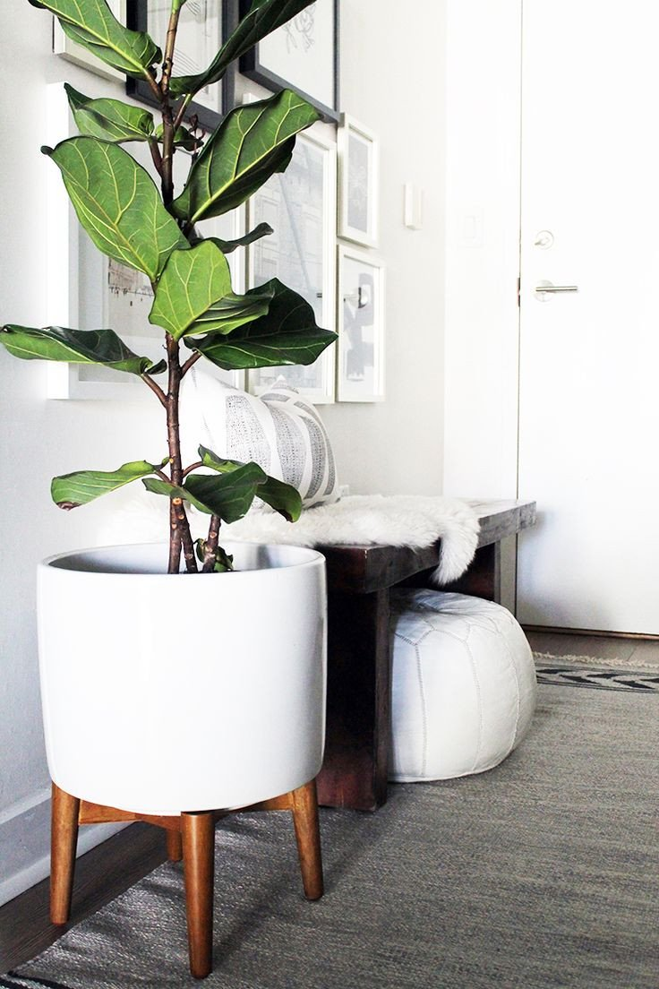 Plant Stand Ideas to Fill Your Living Room Inspirational 25 Best Ideas About Indoor Plant Stands Pinterest Plant In Living Room for Decoration Cbrn