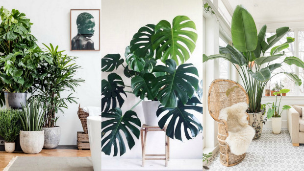 Using Plants In Home Decor Beautiful A List Of the Best Indoor Plants for Fabulous Home Decor