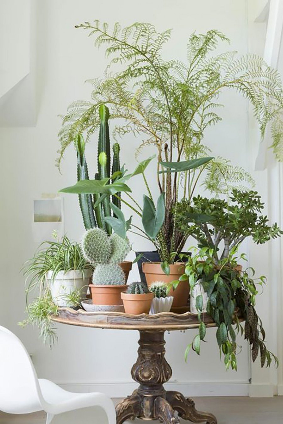 Using Plants In Home Decor Best Of 10 Happy Living Room Ideas with Plants
