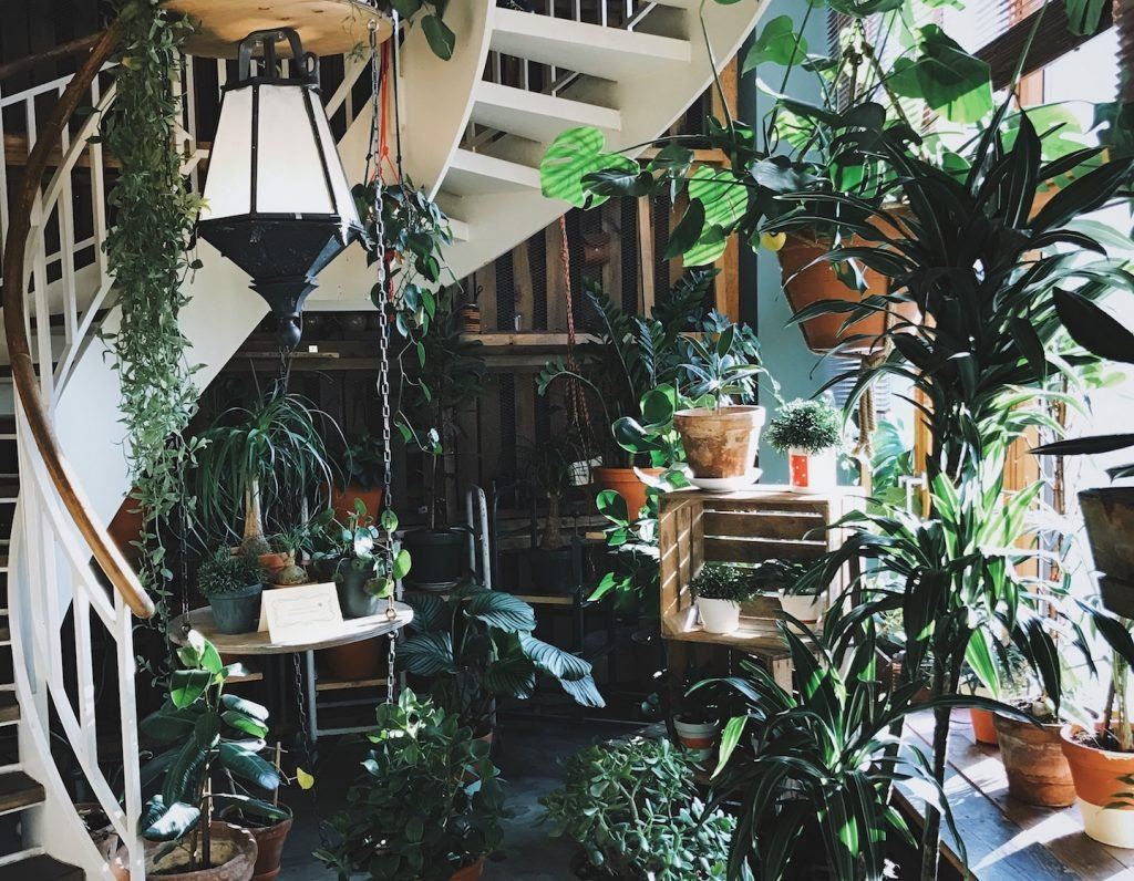Using Plants In Home Decor Elegant 6 Insta Worthy Indoor Plants to Freshen Up Your Home Decor