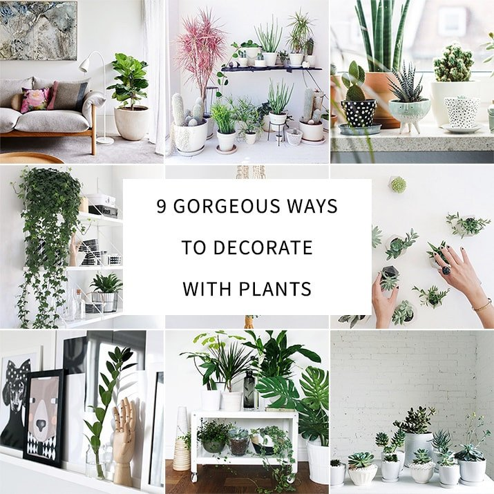 Using Plants In Home Decor Elegant 9 Gorgeous Ways to Decorate with Plants Melyssa Griffin