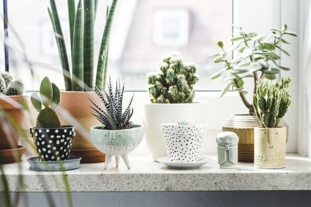 Using Plants In Home Decor Elegant Gorgeous Ways to Decorate Your Home with Plants