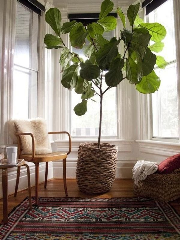 Using Plants In Home Decor Inspirational 7 Stylish Ways to Use Indoor Plants In Your Home S Décor