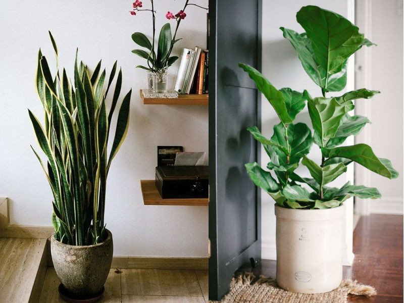 Using Plants In Home Decor Inspirational Stylish Ways to Use Indoor Plants In Your Home Décor