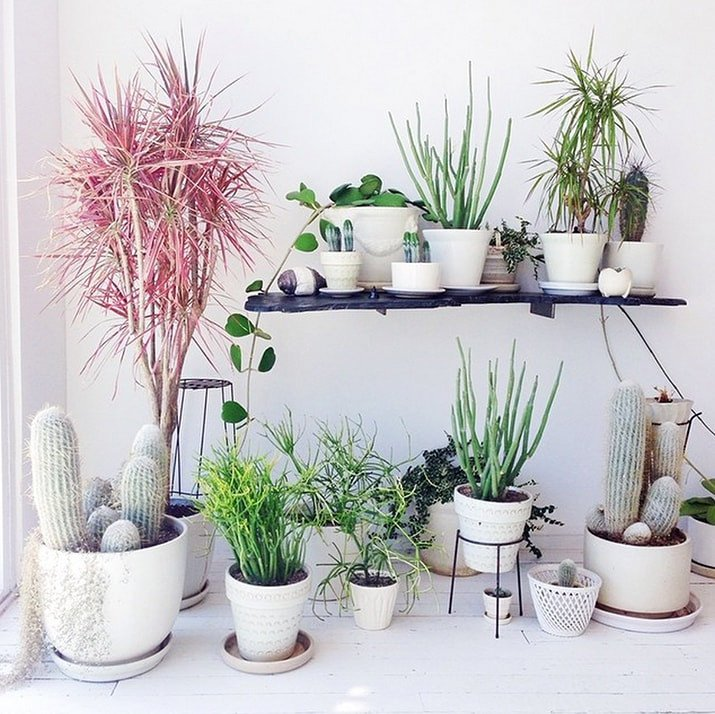 Using Plants In Home Decor Luxury 9 Gorgeous Ways to Decorate with Plants Melyssa Griffin