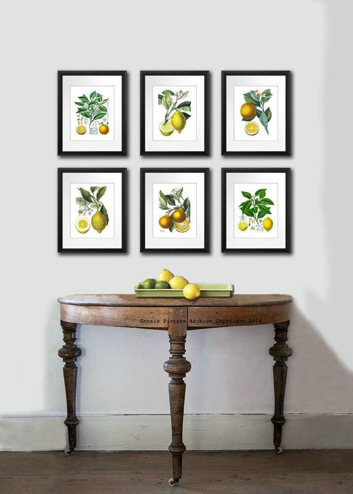 Wall Art Decor for Kitchen Awesome Antique Fruit Print Set Of 6 Lemon orange Botanical Wall Art Dining Room Decor